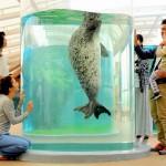 子どもと遊ぶ!京都駅からほど近くの街なか水族館