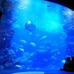 意外と穴場?!京都で楽しむ水族館デート