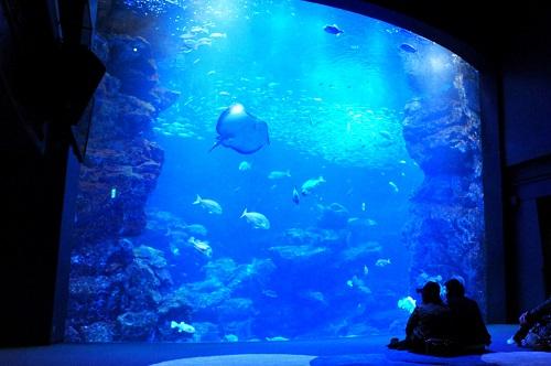 「京の海」大水槽