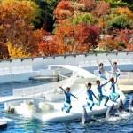 紅葉の秋!京都水族館が穴場スポットの理由