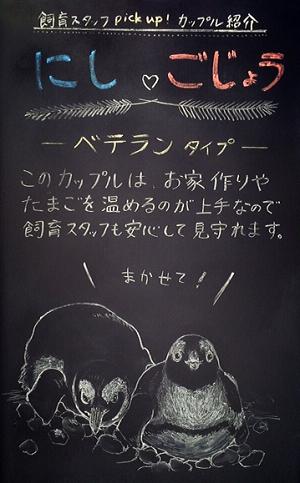 飼育スタッフによる手書きの「ペンギンたまごボード」イメージ
