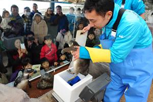 赤ちゃんの成長を実感!「赤ちゃんペンギン体重測定特別公開」