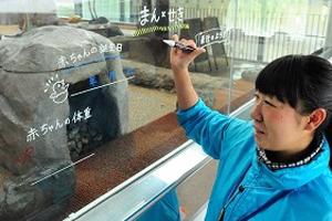 飼育スタッフが綴る「ペンギンの赤ちゃん成長記録」