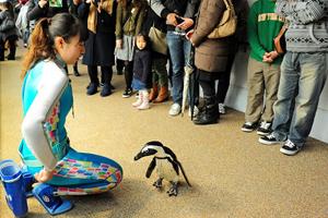 「ペンギンペタペタタイム」期間限定開催