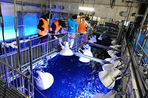 京都水族館でのバックヤードツアー<br />※イメージ