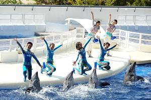 イルカやトレーナーとパフォーマンスを盛り上げます