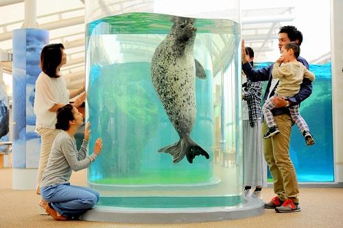 アザラシ | 京都水族館 アザラシ | 京都水族館 営業時間・料金 営業時間・料金 年間パスポー