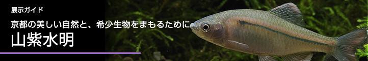 展示ガイド京都の美しい自然と、希少生物をまもるために山紫水明