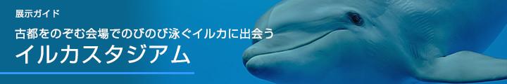 展示ガイド古都を望む風景の中でのびのび泳ぐイルカに出会うイルカスタジアム