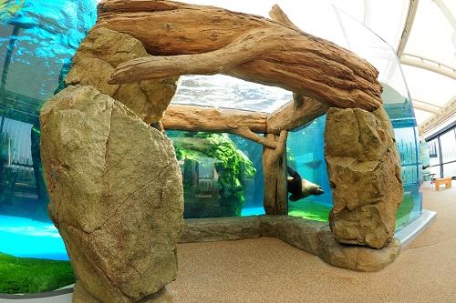 オットセイ | 京都水族館 オットセイ | 京都水族館 営業時間・料金 営業時間・料金 年間パス