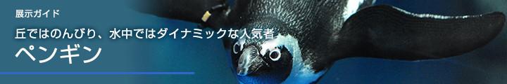 展示ガイド丘ではのんびり、水中ではダイナミックな人気者ペンギンゾーン