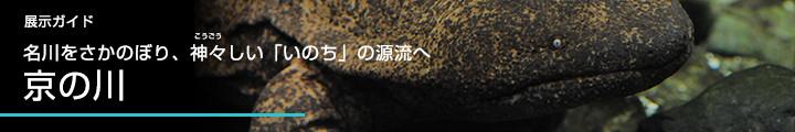 展示ガイド名川をさかのぼり、神々しい「いのち」の源流へ京の川