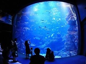 コンサート会場となる「京の海」大水槽