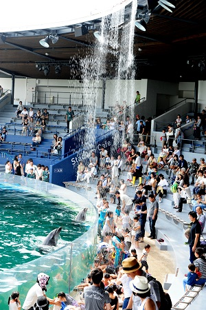 新感覚の夏限定プログラム「イルカとスプラッシュ!!」