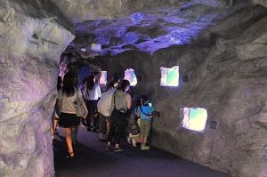 6種類の違いを比較して観察できる「クマノミの洞窟」