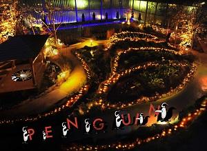 映像と光のイルミネーション<br />「PENGUIN CARNIVAL(ペンギンカーニバル)」(イメージ)