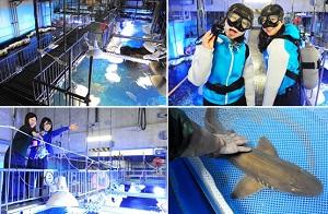 ダイバーなりきり&サメとのふれあい「京の海大水槽探検ツアー」(イメージ)