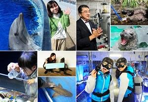 触れ合いに給餌体験、記念撮影にスペシャルツアーなどいきものとの触れ合いが充実の内容にグレードアップした京都水族館の体験プログラム (イメージ)