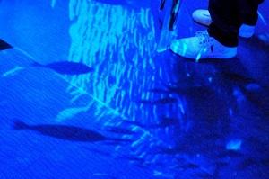 足元をぬうように泳ぐリアルな魚たち