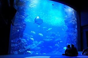 青い光に包み込まれるような感覚を味わえる「京の海」大水槽