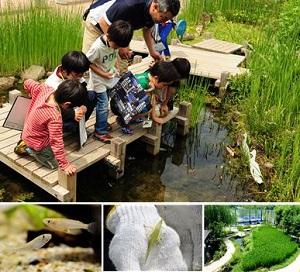 【7月開催】「田んぼで遊ぼう!~特別編~」 季節を感じよう!夏休みいきもの観察 どんないきものがいるかな?