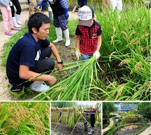 【9月開催】「田んぼで遊ぼう!~稲刈り編~」鎌を使って稲刈りに挑戦!