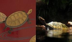 「朱漆塗亀に流水蒔絵盃」・「朱漆塗亀に渦巻絵盃」とニホンイシガメ
