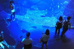 床面に広がる大水槽の地下世界