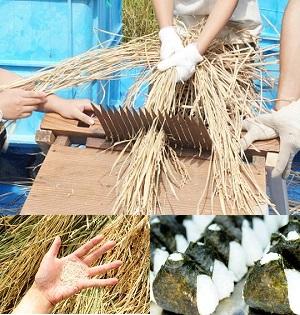 【9月開催】「田んぼで遊ぼう!~脱穀・精米編~」昔ながらの機械を使ってみよう!