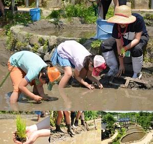 【5月開催】「田んぼで遊ぼう!~田植え編~」泥の感触を感じながら田植えに挑戦!