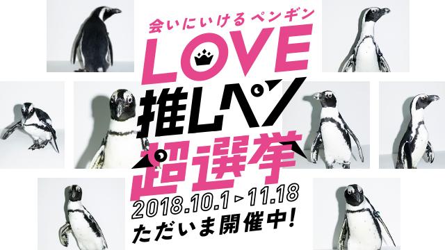 業界初!会いにいけるアイドルペンギンユニット「MIYA-CCO(ミヤッコ)」<br>「LOVE推しペン超選挙」で、あなたの推しペンに投票!